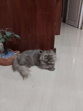 3 months old baby cat