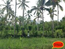 Jual Tanah Kavling Murah dekat Tirtagangga, Amed, Pura Lempuyang BALI