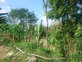 Di sewakan tanah 1,5 hektar di maguo