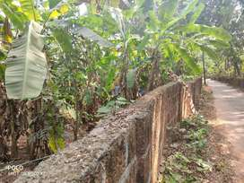 House plot (7 cent ) for sale near to mattanur air port