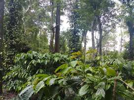 4 acres good condition coffee estate for sale