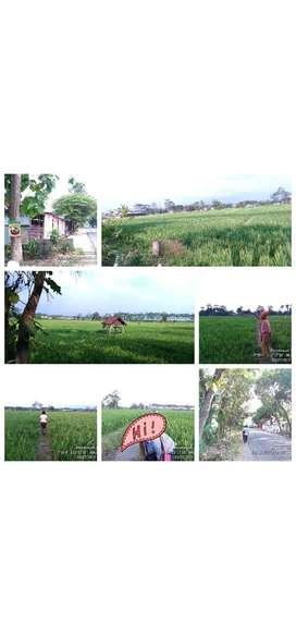 Jual tanah sawah pertanian