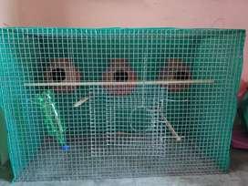 Fancy bird cage for love birds.
