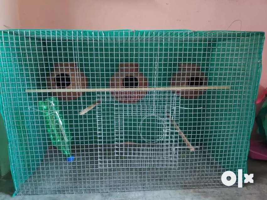 Fancy bird cage for love birds 0