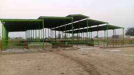 Dairy shed construction development