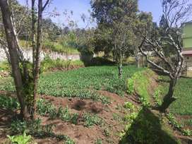 Farm house land for sale in kodaikanal
