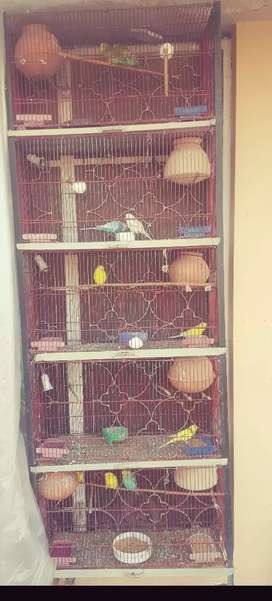 Parrots with cage