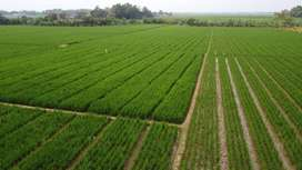 Dijual Tanah dan Sawah Karawang Jawa Barat