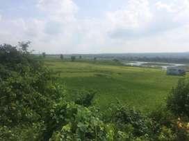 1.5bigha for Farm house land for sale