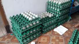 Telur Bebek mas Argya