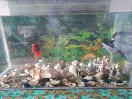 Aquarium sel Karan h