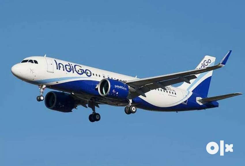 Job requirement in Indigo Airlines ground staff 0