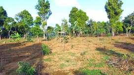 Tanah Kebun Alpukat Cengkeh Durian Dijual Murah di Wanayasa Purwakarta