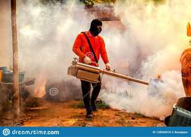 dengue fumigation & Termite Treatment