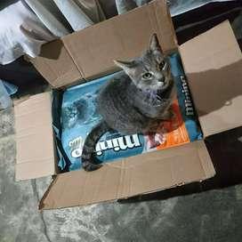 Minino plus makanan kucing repack 0.9 kg Bisa cod