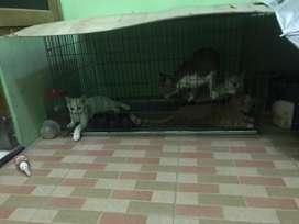 Sayang kucing sayang kucing monggo kandang kuciing super jumbo