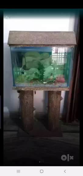 Wooden stylish aquarium