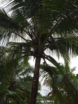 1.25 acre plain land for sale.Near solar park madikai.Kundara