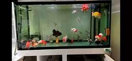 Fish cue aquarium