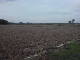 Tanah Strategis Bangun Industri Di Kawasan Cipunagara