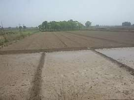Best location Agriculture land