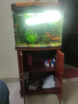 Brand new Fish Tank with Storage table