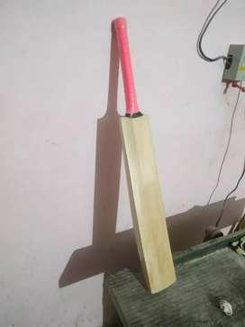 Kashmir willow bats.