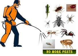 Pest control servises in DMC&H