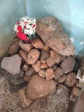 Rock Garden (Dismantled Recently from an Indoor Garden)
