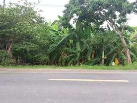 Tanah Depan Jalan Raya Lokasi Wringinharjo Gandrungmangu Cilacap