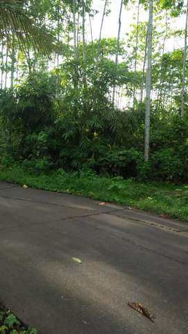 Dijual tanah kebon luas 1, 3 ha. dipinggir jalan kabupaten