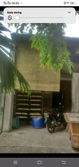 Agen tirai bambu