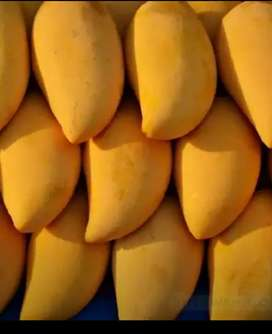 Mango delivery all over in islamabad