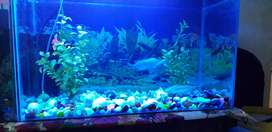 2' fish equarium