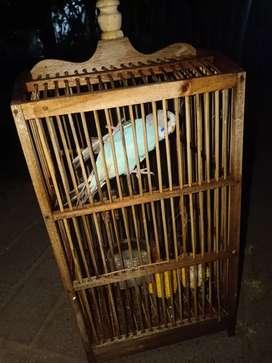Burung parkit + kandang
