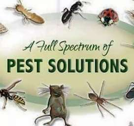 Smart spray (dengue) ( cockroache)( bed bugs)All insecticide killer