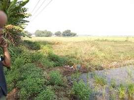 Tanah sawah dijual, lokasi strategis cocok untuk investasi