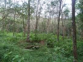 1 acre 90 cent paramp kombazha