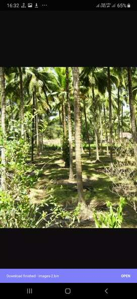 Thota near oorkere for rent