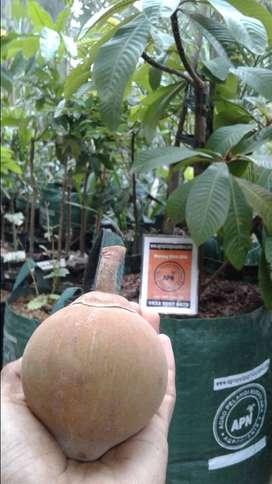 Planter Bag / pot tanaman zaman now