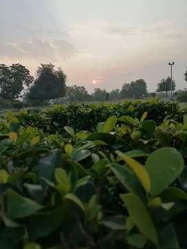 12 acres agriculture land is available Near Nawab hotel.