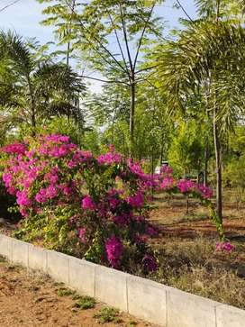 Open plots near Bhongiri Site