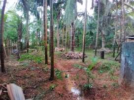 Property with building and plantation for sale.. near Mirjan