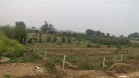 5 Bega Lemon Garden For Sale  Near Allana Meat Factory Talaspur