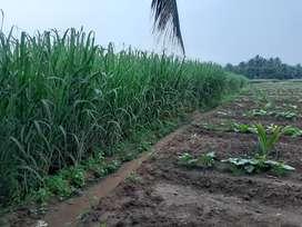Agricultural land/Agriculture land/Agriland/Farm land/Coconut farm