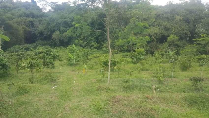 Disewakan lahan kosong bisa untuk ternah atau kebun
