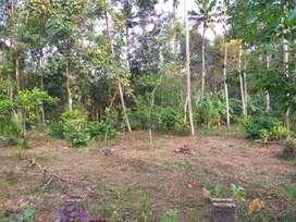 Changanacherry Thengana - Residential Plot