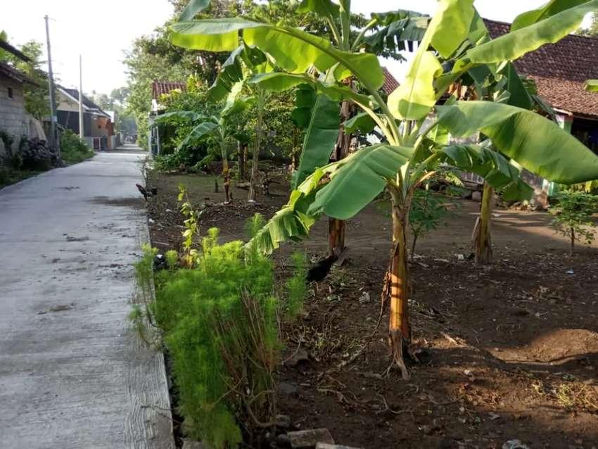 Tanah dijual murah dekat Tirtomartani Kalasan Sleman