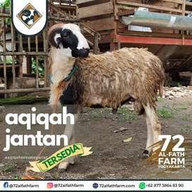 Aqiqah kambing domba yogyakarta