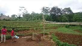 Tanah Kosong Produktif Tanah Perkebunan 3230 Meter Harga Investasi